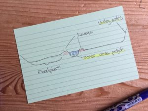 How to use flashcards to learn diagrams